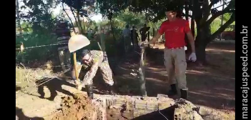 Polícia Militar Ambiental, Bombeiros e CRAS resgatam anta de dentro de uma fossa