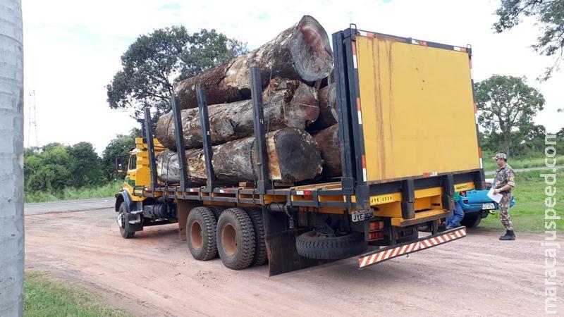 Polícia Militar Ambiental de Campo Grande autua madeireira em R$ 7,5 mil e apreende caminhão com carga ilegal de 25 m³ de madeira em toras