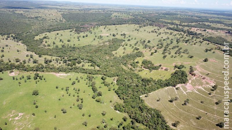 Polícia Militar Ambiental de Coxim autua infratora em R$ 19 mil por desmatamento de vegetação nativa para plantio de pastagem