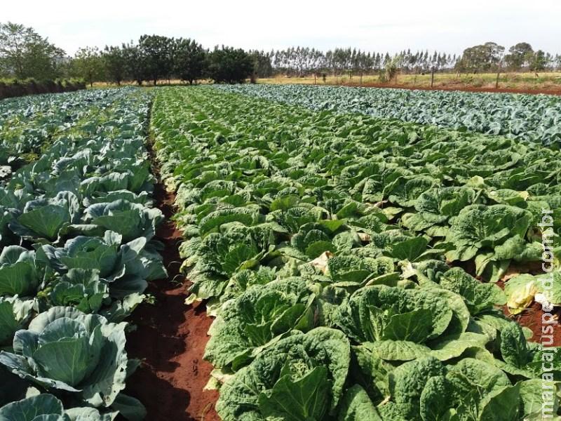 Parceria facilita escoamento e gera renda para agricultores familiares de MS