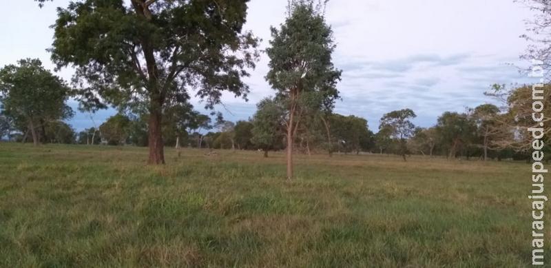 Polícia Militar Ambiental de Rio Negro autua em R$ 3,3 mil homem de 44 anos por desmatamento ilegal