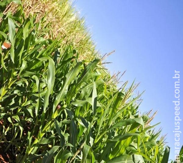 Fertilizantes passam a ter registro automático