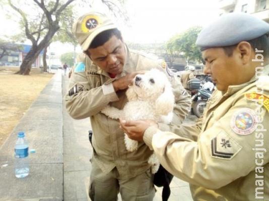 """Com calor recorde, bombeiros salvam poodle """"esquecido"""" em carro"""
