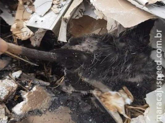 Gambá é resgatado após ser atingido por incêndio em terreno baldio na Capital