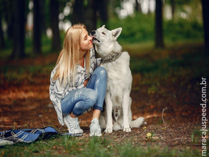 Posse responsável: 5 passos para o tutor manter a saúde e o bem-estar do pet