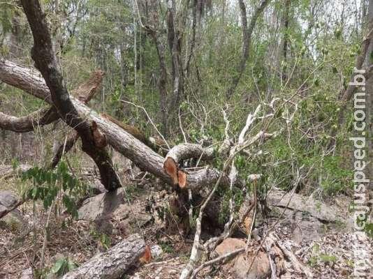 Assentada é multada por derrubada de árvores