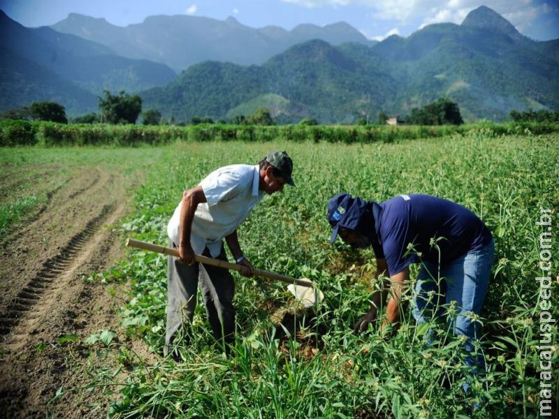 Jovem no campo contribui para modernizar agricultura, diz especialista