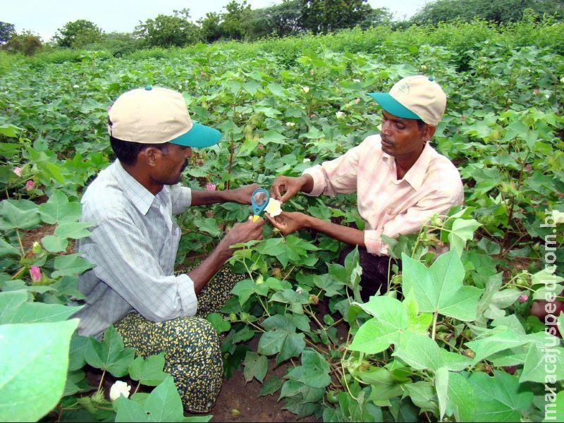 PNUMA: manejo integrado de pragas minimiza uso de pesticidas nas lavouras