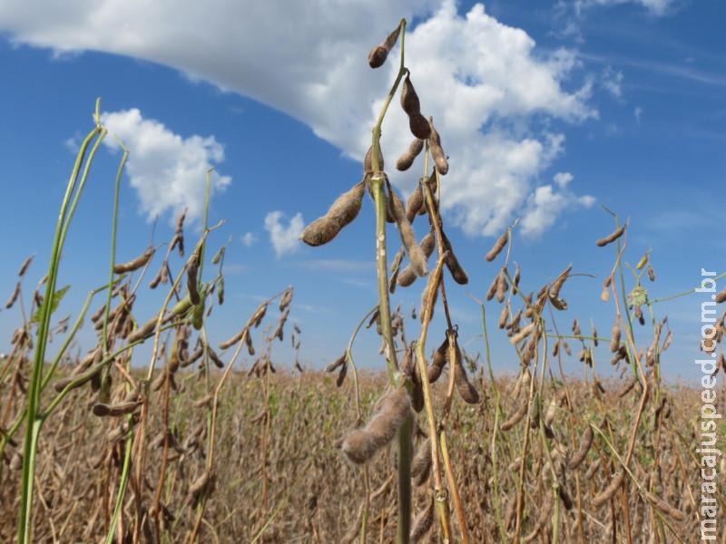 Showtec 2020 conta com três lançamentos nacionais de soja que facilitam manejo