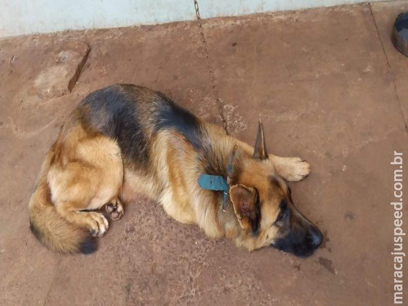 Homem leva multa por manter cão em sucata de veículo