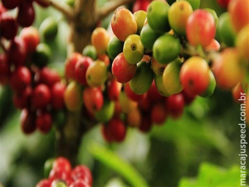 Safra 2020 de café não gerará excedente, aponta CNC