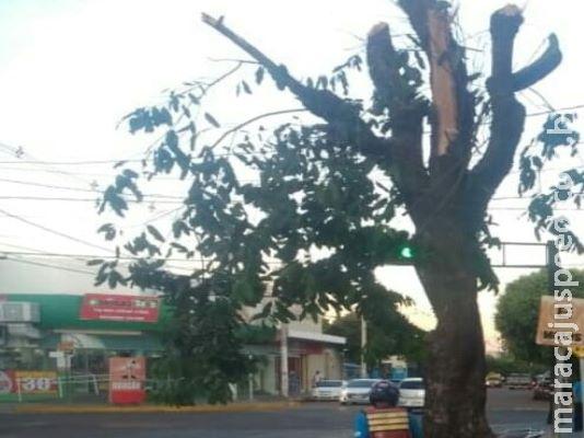 PMA paralisa poda de árvore em via pública e multa infratora