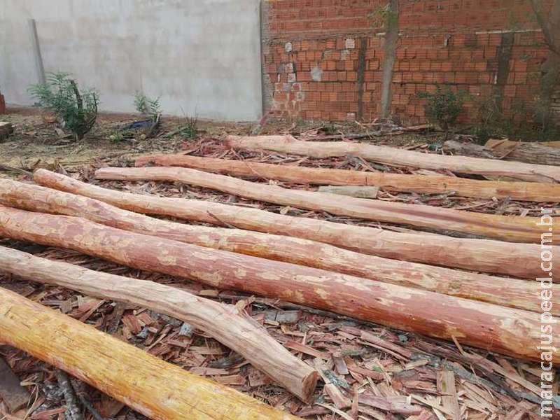 Homem é autuado após retirar madeira de fazendas e comercializar