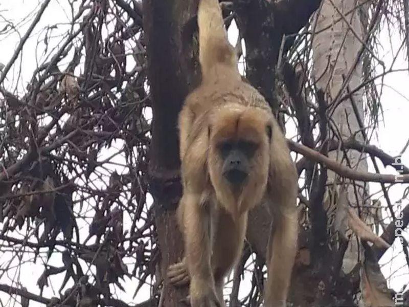 Visita inesperada: Macaco aparece em casa do Vida Nova 2
