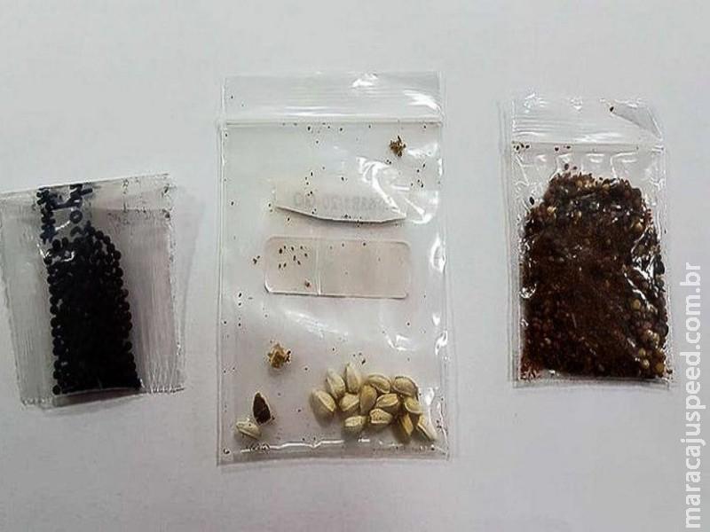 Ministério da Agricultura alerta população a não abrir pacotes de sementes enviados à população
