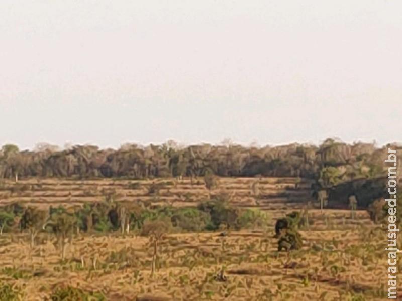 Polícia Militar Ambiental de Campo Grande autua infrator em R$ 490 mil por desmatamento ilegal de vegetação protegida de reserva legal para plantio de pastagem