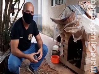 dono é suspeito de abusar sexualmente de cadela resgatada no Jardim Morenão