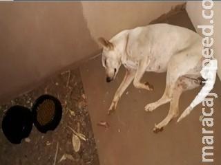 Flagrado pelado com cadela, homem é preso suspeito de abusar de animal em MS