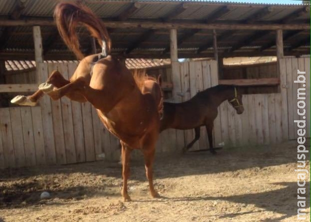 Menina de 8 anos morre após levar coice de cavalo